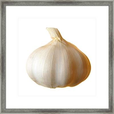 Clove Of Garlic Framed Print by Jim Hughes