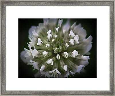 Framed Print featuring the photograph Clover All Over by Annette Hugen