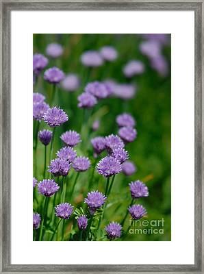Clover Framed Print