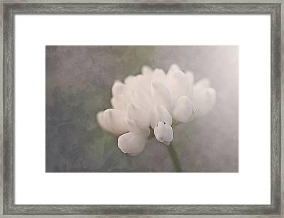 Clover In White Framed Print