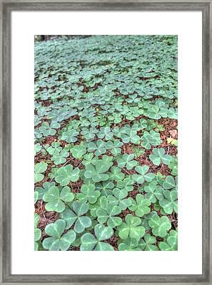 Clover Framed Print by Jane Linders