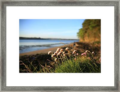 Clover Framed Print by Maeve O Connell