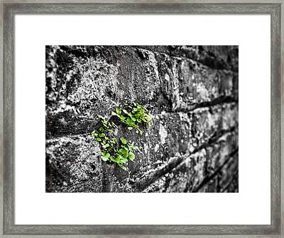 Clover On The Wall Framed Print by Andrew Crispi