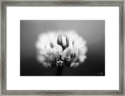 Clover - Bw Framed Print