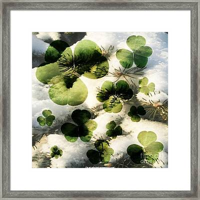 Clovers After The Snow Framed Print