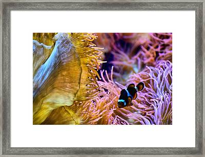 Clown Comfort Zone Framed Print by Angelina Vick