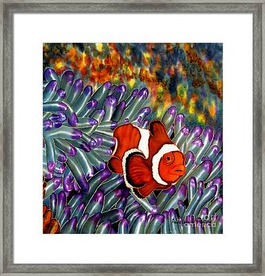 Clown Fish In Hiding Framed Print by Anderson R Moore
