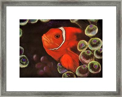 Clown Fish In Hiding  Pastel Framed Print