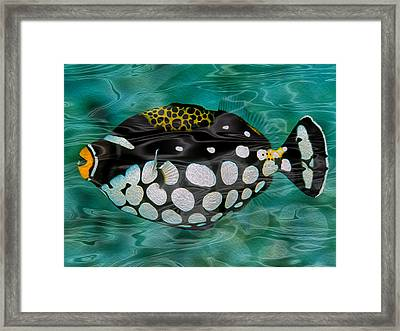Clown Triggerfish Framed Print by Jack Zulli