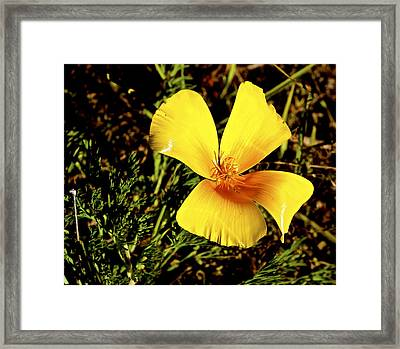 Club Flower Framed Print by Tim Rice