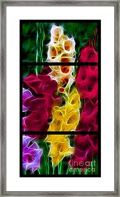 Cluster Of Gladiolas Triptych  Framed Print by Peter Piatt