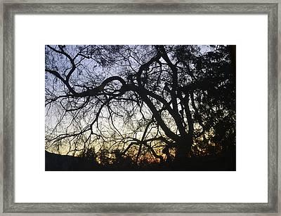Cluttered Sunrise Framed Print by Kiros Berhane