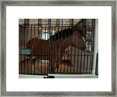 Clydesdale Horses 2  Framed Print by Barbara Dalton