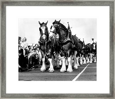 Clydesdale Horses Vintage Framed Print by Retro Images Archive