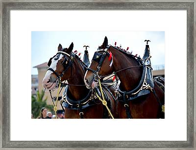Framed Print featuring the photograph Clydesdales 2 by Amanda Vouglas