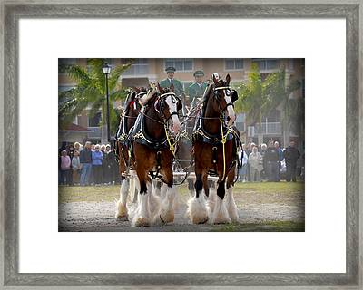 Framed Print featuring the photograph Clydesdales 4 by Amanda Vouglas