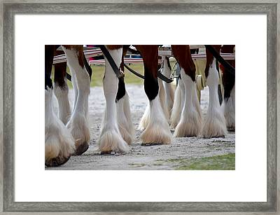 Framed Print featuring the photograph Clydesdales 5 by Amanda Vouglas