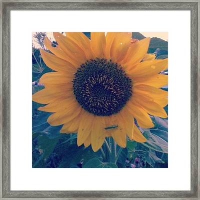 Co-existing Framed Print