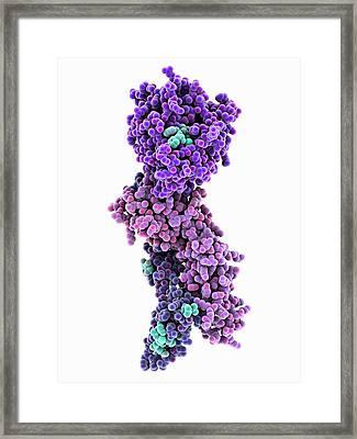Coagulation Factor Complex Molecule Framed Print