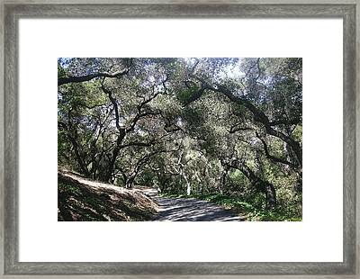Coast Live Oaks Framed Print