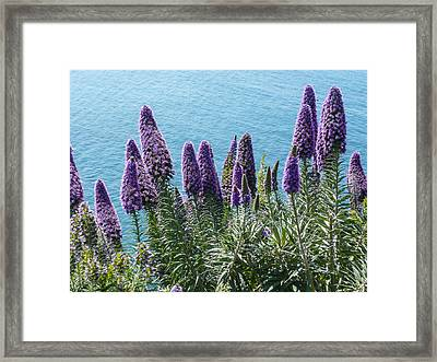 Coastal Beauty Framed Print
