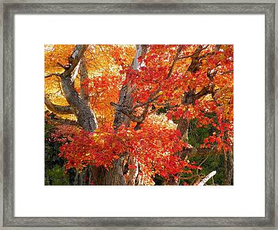 Framed Print featuring the photograph Coastal Colors by Gene Cyr
