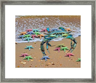 Coastal Crab Collection Framed Print by Betsy Knapp