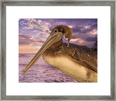 Coastal Fairytales Framed Print by Betsy Knapp