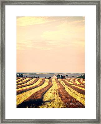 Coastal Farm Pei Framed Print by Edward Fielding