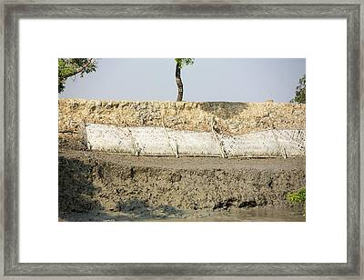 Coastal Flood Defences In The Sunderbans Framed Print by Ashley Cooper