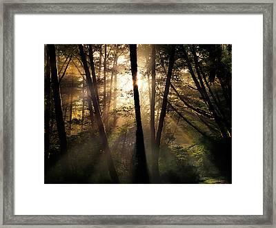 Coastal Forest Light Framed Print by Leland D Howard