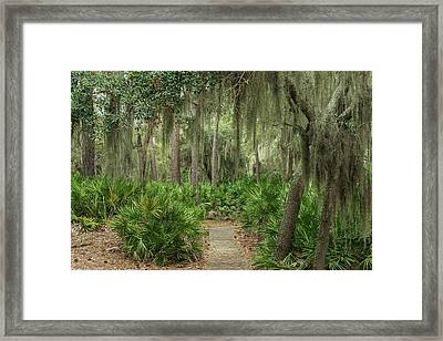 Coastal Forest With Spanish Moss Framed Print by Pete Oxford