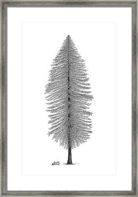 Coastal Redwood Framed Print