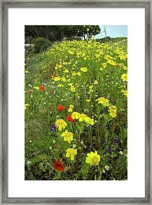 Coastal Wildflowers Framed Print by Bob Gibbons