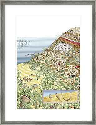 Coastal Wildlife, Artwork Framed Print by Luis Montanya/marta Montanya/sciencephotolibrary