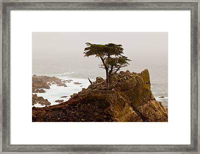 Coastline Cypress Framed Print