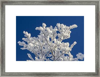 Coated In Feathers Of Ice Framed Print
