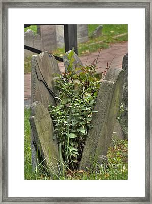 Cobbs Hill Burial Ground 4 Framed Print by Deborah Smolinske