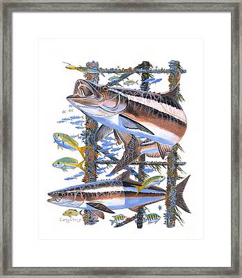 Cobia Hangout Framed Print by Carey Chen