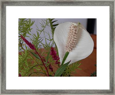 Framed Print featuring the photograph Cobra Glory by Belinda Lee