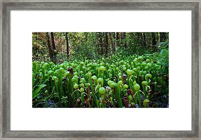 Cobra Lily Bog Framed Print