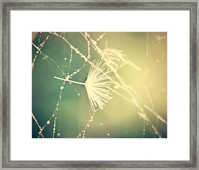 Cobweb Dandelion Seed Framed Print