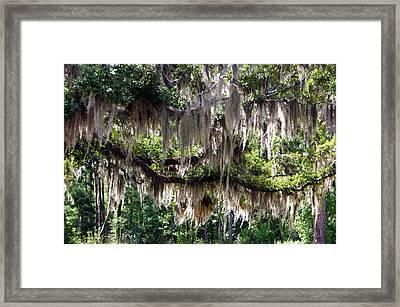 Cobwebs Of Moss Framed Print
