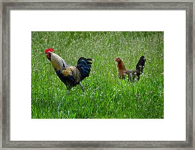 Cock-a-doodle-doo Framed Print by Steven  Michael