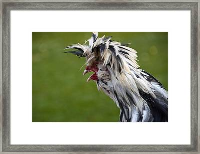 Cockadoodledo Framed Print by Michele Wright