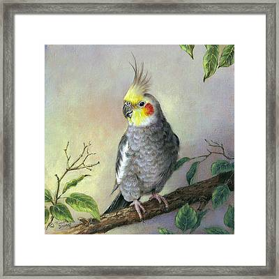 Cockatiel Framed Print by Nicole Troup