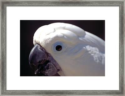 Cockatoo Head Framed Print by Wendy Fox