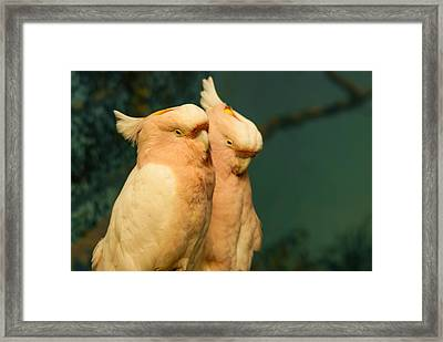 Cockatoo I Love You Framed Print