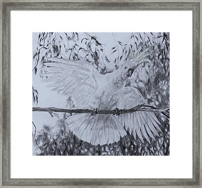 Cockatoo Framed Print by Leonie Bell