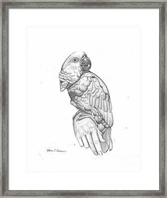 Cockatoo Loves Framed Print by Rebecca Christine Cardenas